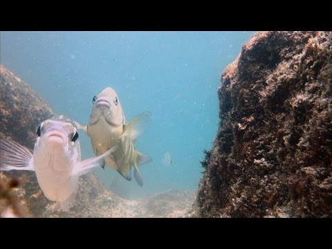 Snorkeling Snoopy Island - Fujairah