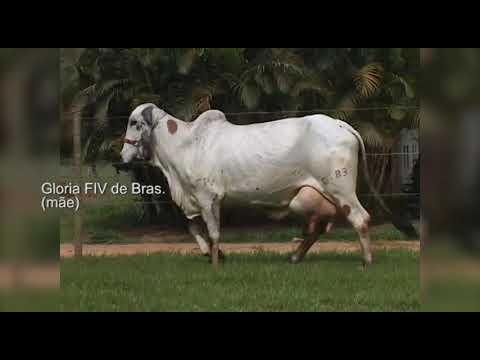 VALE ESTE LOTE 6  RRP 8942 VERIDICA FIV DE BRASILIA
