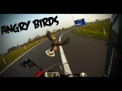 Angry Birds VS Triumph Daytona -  Big bird hits motorcycle