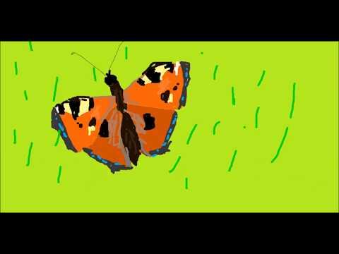 Вопрос: Как отличить бабочку адмирал от бабочки крапивницы?