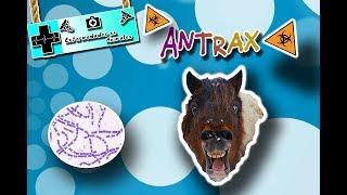 Ántrax o Carbunco (La enfermedad del Mal del rayo) |Enfermedades de los animales|