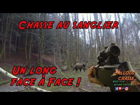 Chasse aux sangliers, un face à face interminable !!