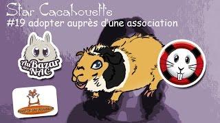 adopter un cochon d'Inde dans une association NAC