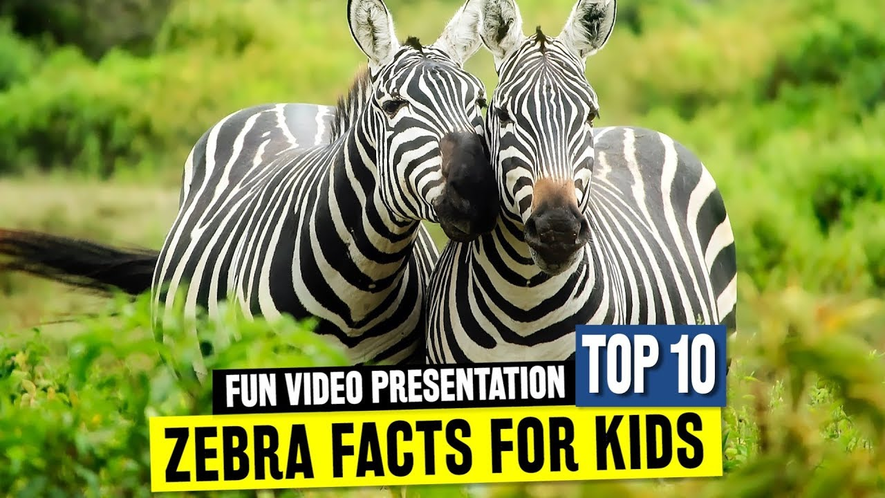 All About Zebras For Kids Fun Facts And Wild African Animal