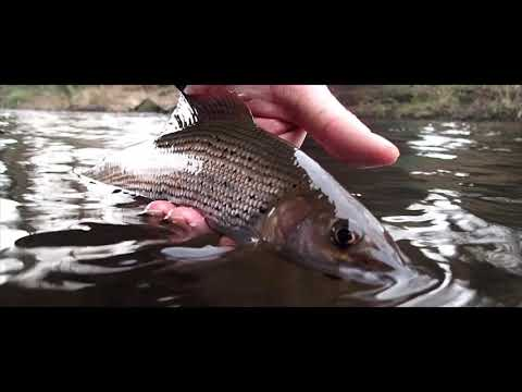 Fly Fishing For Winter Grayling