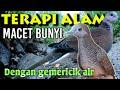 Terapi Macet Bunyi Perkutut Dan Tekukur Saling Bersahutan Di Alam Serta Gemericik Air  Mp3 - Mp4 Download