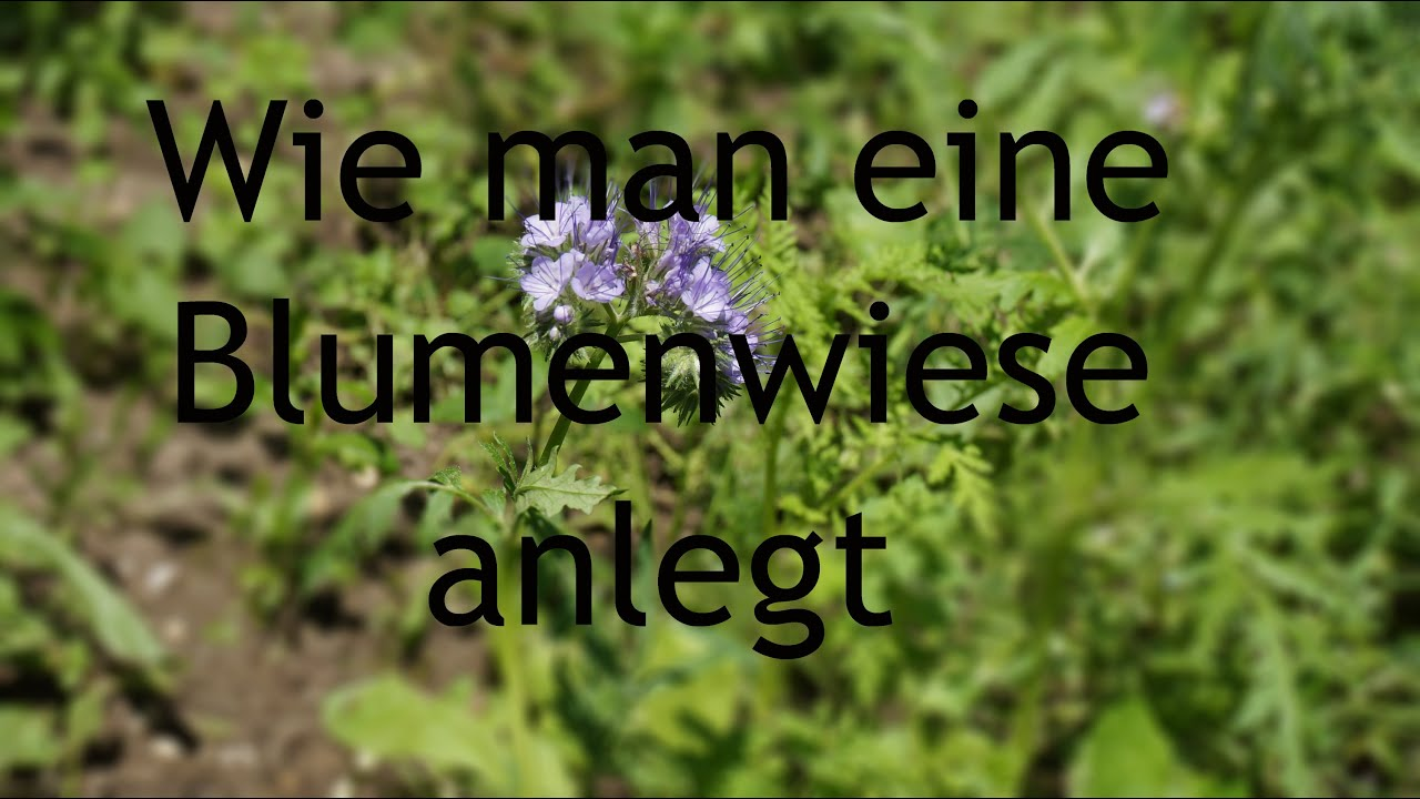 prakisch: wie man eine blumenwiese anlegt - youtube, Gartengerate ideen