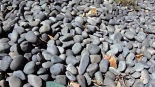 Скачать Black Mexican Beach Pebbles La Paz Type
