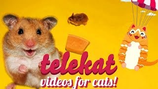 Play this video for your cat and await the FUNNY! Telekat: Videos for cats to watch