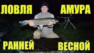 Ловля амура весной / Рыбалка на амура по холодной воде