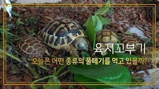 거북이 풀 뜯어 먹는 소리하고 자빠졌네!^^(feat.…