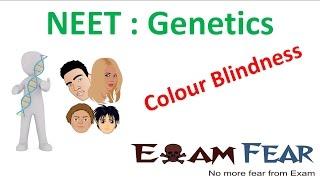NEET Biology Genetics :  Colour Blindness