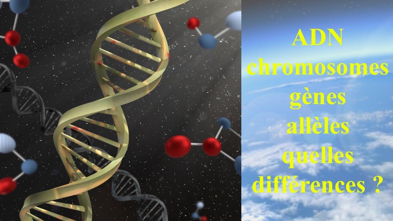 Download ADN, chromosomes, gènes, allèles, quelles différences ?
