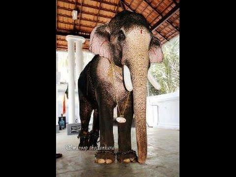 THECHIKOTTUKAVU RAMACHANDRAN at UTHRALIKKAVU POORAM  2015 / wadakkanchery desam/star elephants