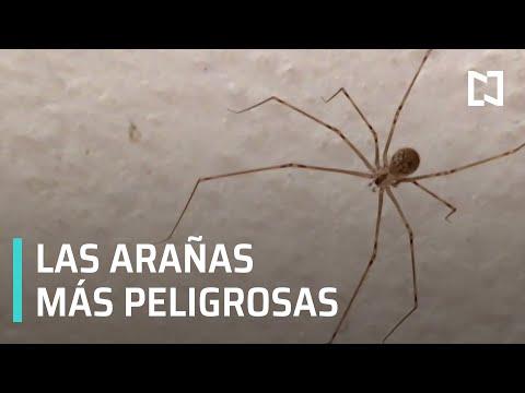 Síntomas de picadura de araña   Tipos de araña - Las Noticias