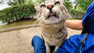 公園にいた猫が膝の上でフミフミして可愛過ぎる