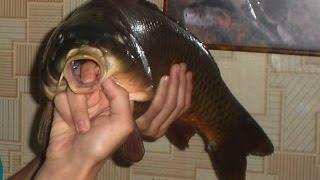 Рыбалка на пенопласт это круто