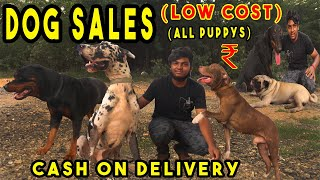 dogs and Puppy's on Sales | All Breeds Puppy Price List | delivery available | kennel near me at1000
