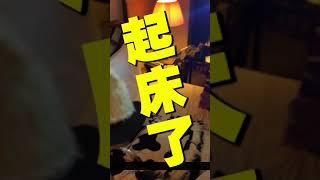 【缺席舞團】表演團體-►「小丑們表演前都在幹嘛?」小丑房間突襲【in臺北晶華酒店】