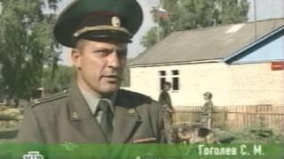 Военное дело  Военные собаки