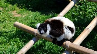Αττικό Ζωολογικό Πάρκο... HD