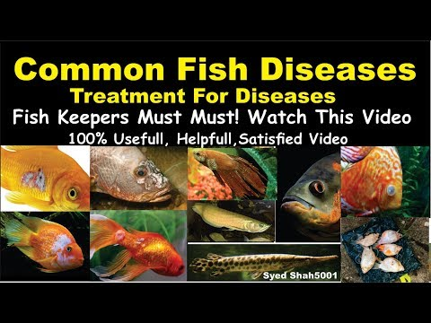 Types Of Aquarium Fish Disease And Treatment Of Diseases Hindi Urdu With English Sub #Fishdisease