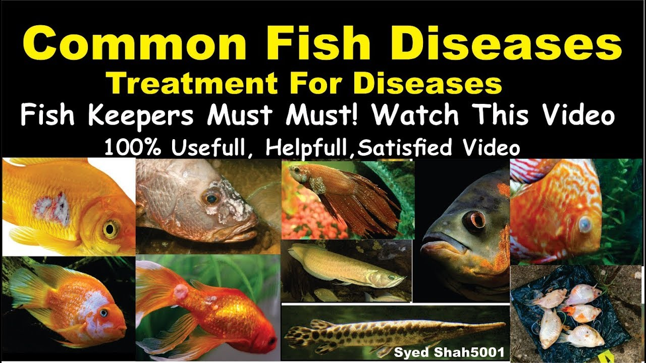 Aquarium fish disease and treatment of diseases in hindi for Fungus in fish tank