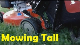 How Tall To Mow Your Lawn All Year Long : Seasonal