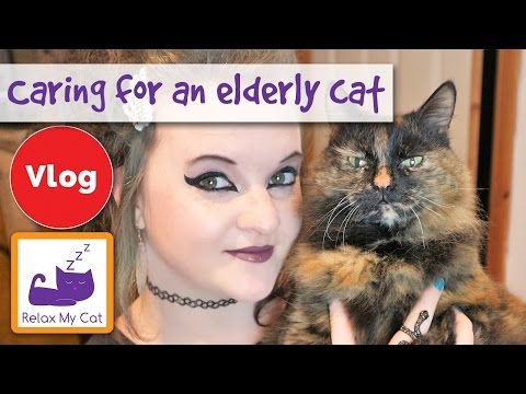How to care for an elderly cat: 5 tips from Claire and Rags!