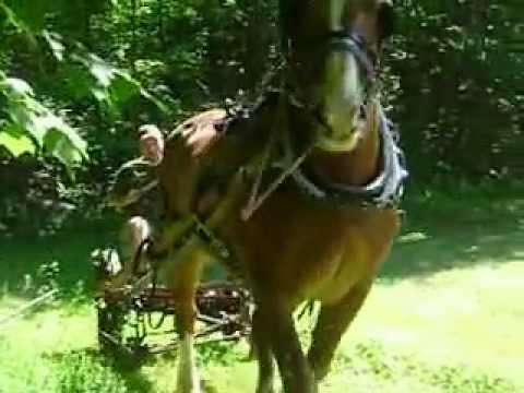 Horse Drawn Single Horse Mower 2012