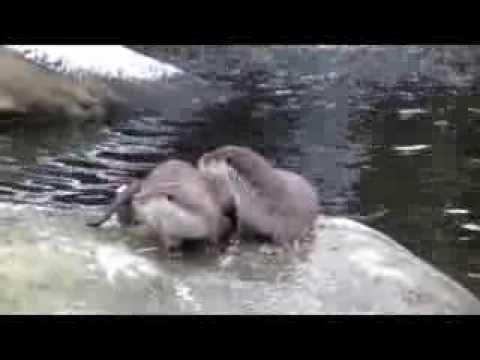 Eurasian otter enclosure at Stockholm Skansen Zoo