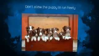 Tips For Potty Training a Puppy | Puppy Potty Training Tips | Golden Retriever Puppy Training Tips