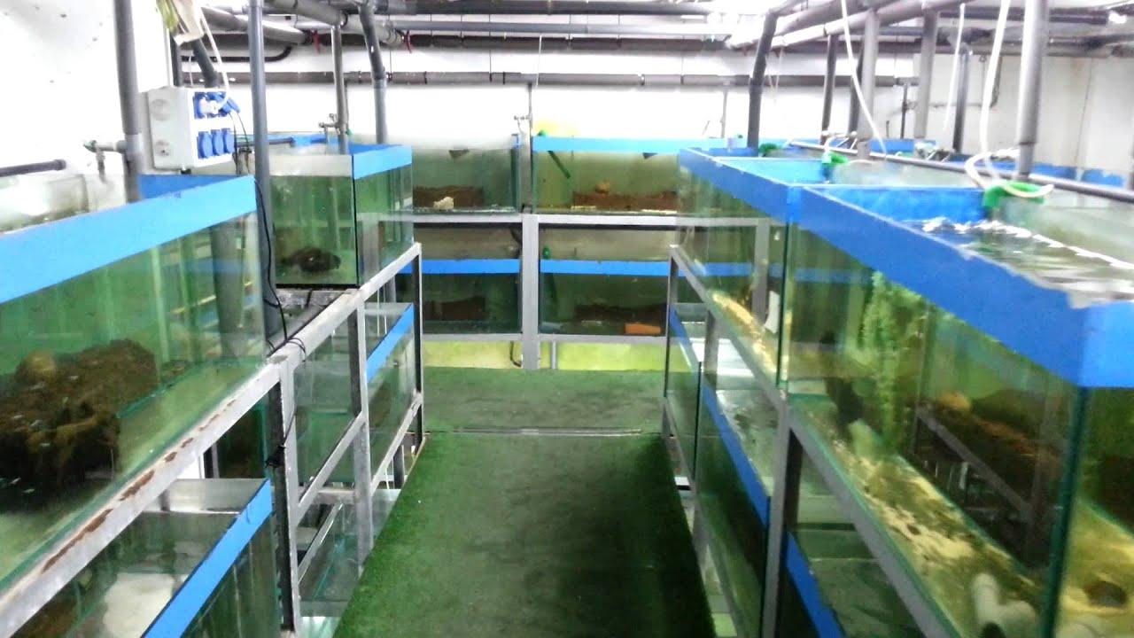 Tienda de peces part 1 youtube for Accesorios para estanques de peces