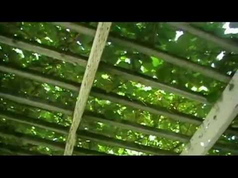 Learn More About Building Backyard Trellis For Your Vines
