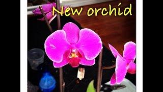 Покупка ДЕШЕВОЙ орхидеи, Что делать первым делом?(This video is about New Orchid https://youtu.be/6IZ50MP9F38 Если вы купили орхидею не в лучшем состоянии , но за дешево, вам необходимо..., 2015-03-15T20:15:48.000Z)