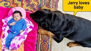 My dog wants baby||jerry is trying to irritate anshu||rottweiler dog.