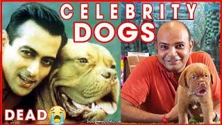 Celebrity Dog || SALMAN KHAN DOG || BAADAL BHANDAARI || MYSON || MYJAAN  || French Mastiff
