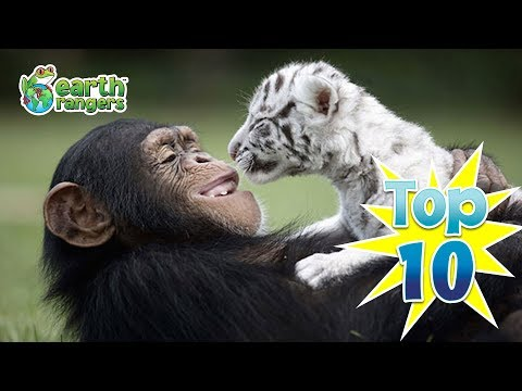 Top Ten ways animal friends help each other out!