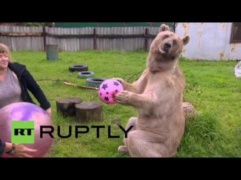 Russia: Meet Stepan, The 300kg Brown Bear Who's Found A Human Family