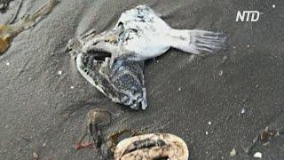WWF: загрязнение океана на Камчатке, возможно, вызвано токсичным веществом