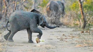 World's Best Elephant Soccer Player