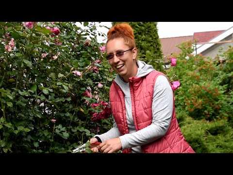 Секреты выращивания плетистых роз