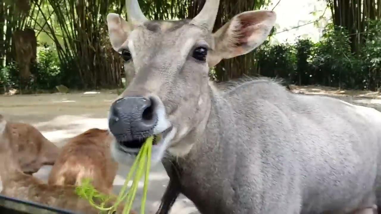 Wisata Ke Taman Safari