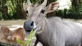 Taman Safari Indonesia Bogor New Oktober 2018