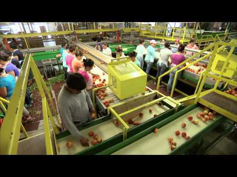 South Carolina Peaches - America's Heartland