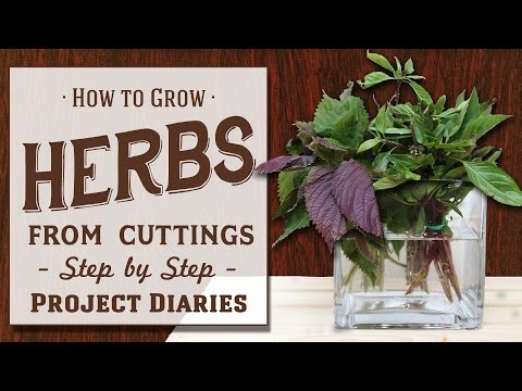 ★ How to: Grow Herbs from Cuttings (A Complete Step by Step Guide)