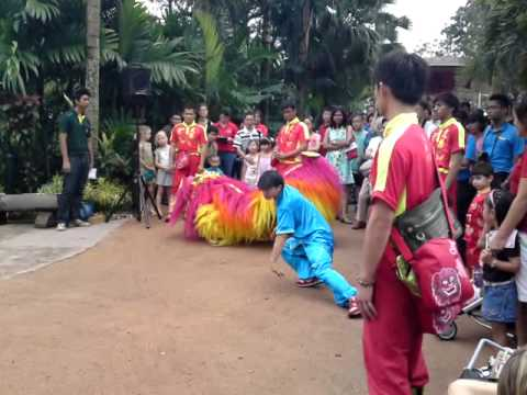 Northern Lion Dance @ Jurong Bird Park, Singapore - Part 1
