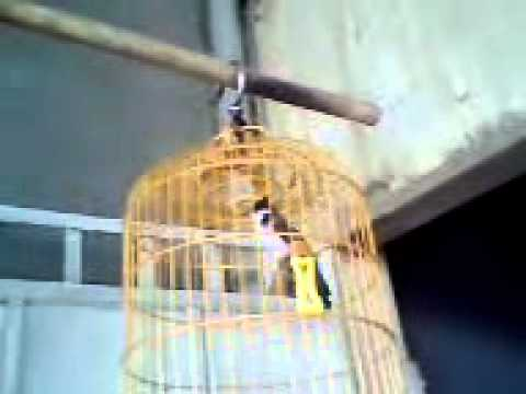 Chao mao binh duong(ban)dt 0924076297