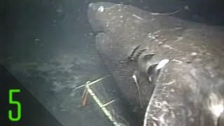Strange deep sea creatures, sounds, and anomalies science has strug...