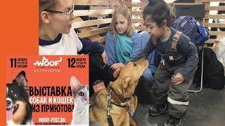 Good Boy Mark на Собаки из Приюта Видео для детей Выбирайте питомца